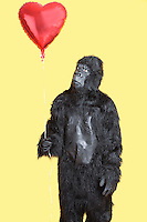Young man dressed in gorilla costume looking at heart shaped balloon standing over yellow background