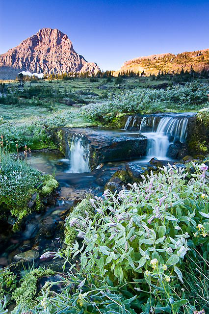 colorful frosty fall wildlflowers along small creek below clements mountain glacier national park, crown of the continent, montana, usa