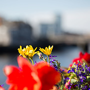 Limerick City Flowers