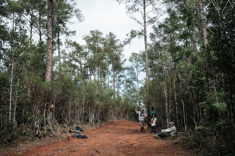 Ornithologists Martjan Lammertink uses a the feedback call to try and reach any ivory-billed woodpeckers on the Northern edge of Humbolt National Park in Eastern Cuba, on Jan. 27, 2016.