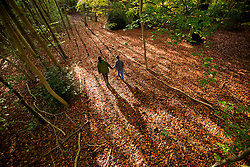 © Licensed to London News Pictures. 27/10/2015. Dorking, UK. People walk on a carpet of fallen beech leaves on Fetcham Downs. Photo credit: Peter Macdiarmid/LNP