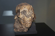 Ethiopia, Addis Ababa, the National Museum, skull of Selam, the first child Australopithecus afarensis (3.3 million years)
