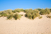 Sand dunes at Holkham beach, north Norfolk coast, England