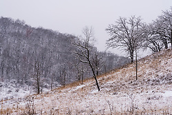 The prairie, trees and hills of the Pleasant Valley Conservancy in Southern Wisconsin.