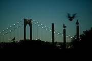 USA, Newport, RI - Seagull takes flight from a piling in a dusk view of the Newport Bridge from Rose Island.