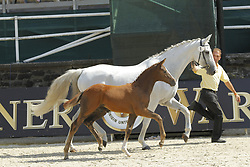 Kopf-Nr.01, Hengstfohlen von Quaid, Calido<br /> Fohlenchampionat Hengstfohlen<br /> Nörten Hardenberg Burgturnier - 2011<br /> (c) www.sportfotos-Lafrentz. de/Stefan Lafrentz