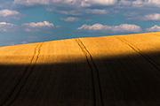 Wheat field in Dobrudzha region