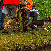 Photography was made during the 2014 West Allis Training Kennel Club Hunt Test. The event took place October 4th and 5th and was held on the  grounds of the WATKC,  in Big Bend, WI.