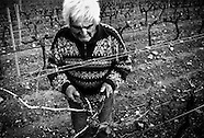 Pruning the vines in Provence