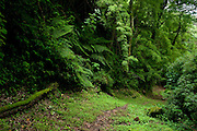 Cloud Forest spot at Baru National Park, Baru Volcano, Highlands, Chiriqui province, Panama, Central America