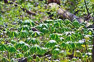 Ohio Spring