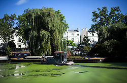 © Licensed to London News Pictures. 24/07/2018. London, UK. The canal networks of Little Venice in central London continue to be covered in green algae, as warm temperatures in the capital continue. Forecasters are predicting record temperatures later this week. Photo credit: Ben Cawthra/LNP