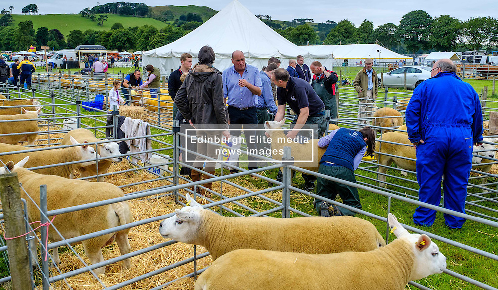 Biggar, South Lanarkshire, Scotland 23 July 2016<br /> <br /> Penned Texel sheep waiting to be shown.<br /> (c) Andrew Wilson | Edinburgh Elite media
