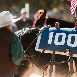 100 Mules Bishop