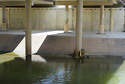 Flooding Impacts - Debris