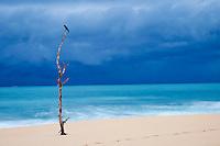 Sri Lanka, province du Sud, plage de Tangalle // Sri Lanka, Southern Province, South Coast beach, Tangalle beach