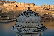 Amber Fort, Amer, Jaipur