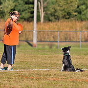 Photography is from the first UpDog Challenge event,  in WI.  The sport incorporates disc and Agility skills. The event took place at Army Lake Camp,  East Troy, WI on Sept 30, 2017. It was a bright and sunny Autumn day, with an occasional bluster of wind.