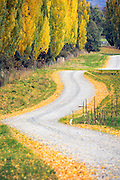 On the outskirts of Queenstown lies this windy road lined with golden autumn leaves.