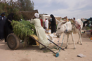 A stallholder and his mule at the weekly market at Qurna, a village on the West Bank of Luxor, Egypt.