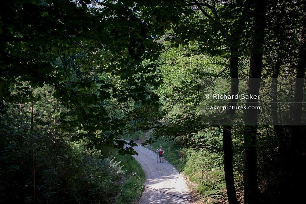 A lone female walker on a path is rural Italy, near Bozen-Bolzano, south Tyrol.