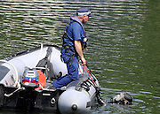 © licensed to London News Pictures. RICHMOND, UK.  01/08/11. A police diver is lowered from a boat. The Metropolitan police search the River Thames near Richmond, London, today (1 Aug 2011) after a 17 year boy went missing after taking part in a kayak competition.  Mandatory Credit Stephen Simpson/LNP