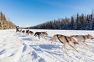 Musher Nathan Sterling competing in the Fur Rendezvous World Sled Dog Championships at Campbell Airstrip in Anchorage in Southcentral Alaska. Winter. Afternoon.