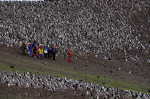 Antarctica, Tourists in Chinstrap Penguin rookery. Hannah Point. Antarctica Peninsula.