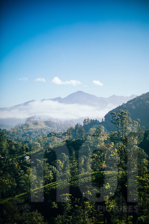 Tea plantations and mountains in hill country, Ella, Sri Lanka, Asia