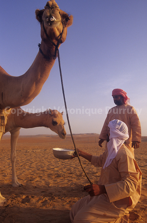 Traditional life of Abu Dhadi bedouins