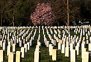 Image of Arlington National Cemetery in Arlington, Virginia, east coast