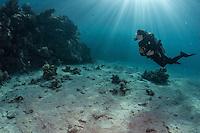 A model explores the reef.