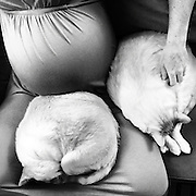 A very pregnant Christine Hart sits with her cats Moe and Sebastian.
