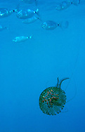 Alberto Carrera, Narural Colors Exhibition, Jellyfish, Mediterranean Sea, Spain, Europe
