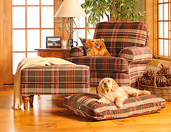 Golden retriever puppy on dog bed in front of easy chair on sunny day