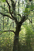 trunk and branches of big old tree