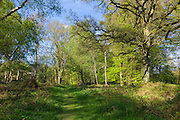 Country walk on nature trail within Bruern Wood in The Cotswolds, Oxfordshire, UK