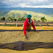Freshly milled coffee is placed on drying beds at the Dukendakawa Cooperative wet mill processing facility. The coffee is placed on drying tables after the pulp is removed. The cooperative is made of small lot farmers that bring their coffee from hillsides in surrounding communities to the facility for processing. Photographed on Saturday, April 29, 2017.  (Joshua Trujillo, Starbucks)