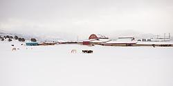 A snowy farm scene in Heber, Utah