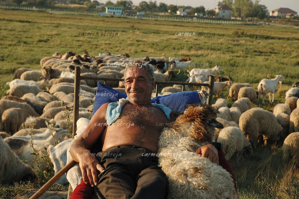 sheperd posing in oltenia region