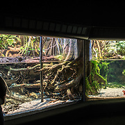 A woman stands in front of a large tank exhibit of estuarine fish and animals at the National Aquarium in Baltimore, Maryland.
