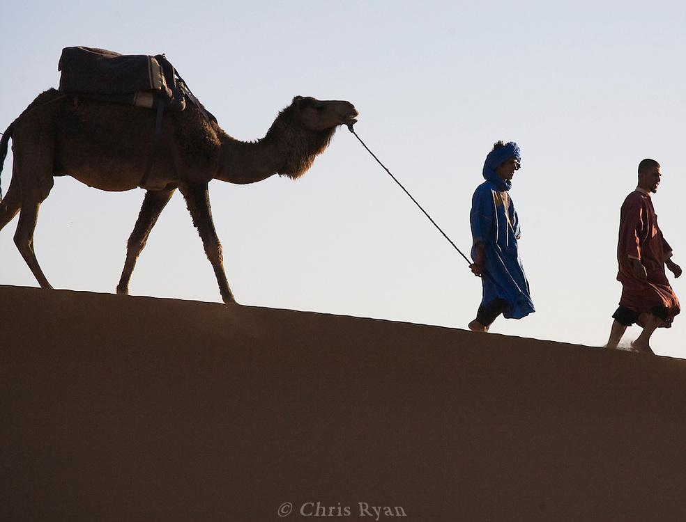 Berber leading camel, Merzouga, Sahara Desert, Morocco