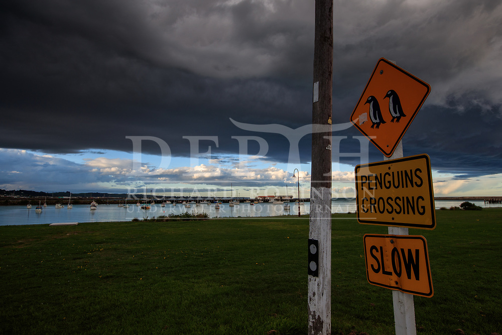 Little penguin road crossing sign in Oamaru, New Zealand.<br /> 12October2016<br /> Photograph Richard Robinson &copy; 2016