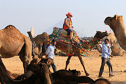November 20, 2018 - Pushkar, Rajasthan, India - Indian traders gathered to sale their camels at Pushkar Camel Fair 2018 ,in Pushkar, Rajasthan , India , Nov 20,2018. Thousands of livestock traders from the region come to the traditional camel fair where livestock, mainly camels, are traded. This annual five-day camel and livestock fair is one of the world's largest camel fairs.(Photo By Vishal Bhatnagar/NurPhoto) (Credit Image: © Vishal Bhatnagar/NurPhoto via ZUMA Press)