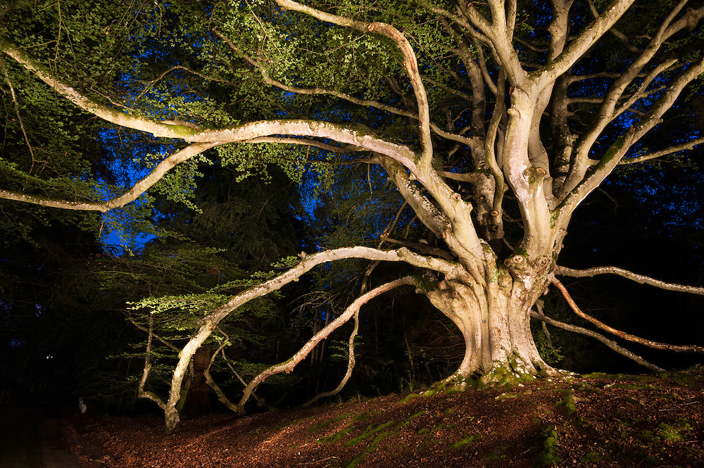 Rod and Roddy Mackenzie (unrelated) at the Kissing Tree, Kilravock Castle, Croy, Scottish Tree of th Year 2014 candidate