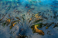 Natural formations of seaweed reminiscent of the Palm Islands.