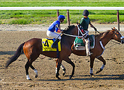 One of the best claims in recent memory, Saginaw is a tough, games horse that always gives his best. He was a bit over his head in this race, the Metropolitan Mile in 2012, a grade 1. Sadly, Saginaw broke down in a race the next year in which he was favored to win, and had to be euthanized.