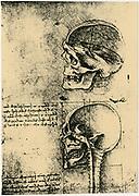 Leonardo da Vinci (1452-1519) Italian painter, sculptor, engineer, architect. Anatomical drawings  of a skull in profile with cranium removed.