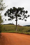 Bueno Brandao, Brasil...Estrada de terra em Bueno Brandao...A dirt road in Bueno Brandao...Foto: LEO DRUMOND / NITRO