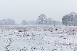 © Licensed to London News Pictures. 17/03/2018. London, UK. Bushy Park is covered in snow as further cold weather reaches London. Photo credit: Rob Pinney/LNP